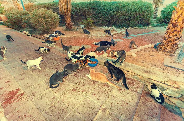 Colonias felinas: ¿cómo gestionarlas?