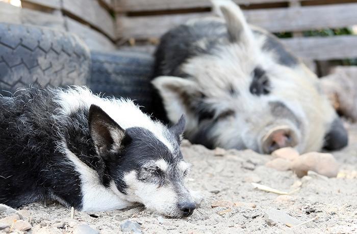 ¿Qué hacer si vivo en Catalunya y tengo que desplazarme para atender animales a mi cargo?