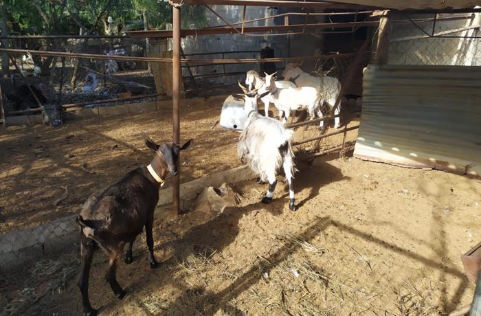 La Dirección General de Agricultura y Ganadería de Murcia quiere sacrificar los animales decomisados a un Síndrome de Noé