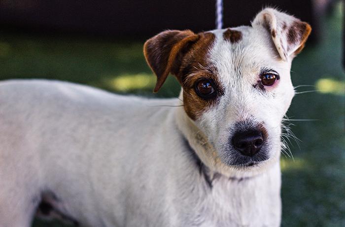 5 cosas a tener en cuenta antes de adoptar un perro durante la pandemia