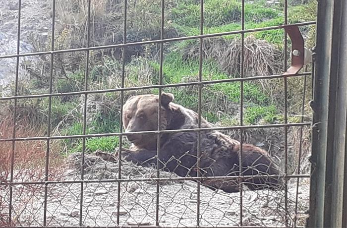 Denunciamos la situación de semiabandono de varios animales del Zoo de Almuñécar