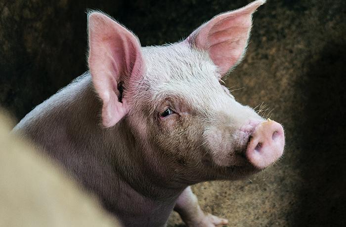 Superbacterias en la carne de cerdo de Carrefour España