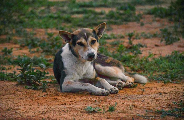 Asesoramos al Ayuntamiento de Ascó que gestionará de forma ética a los perros asilvestrados del municipio