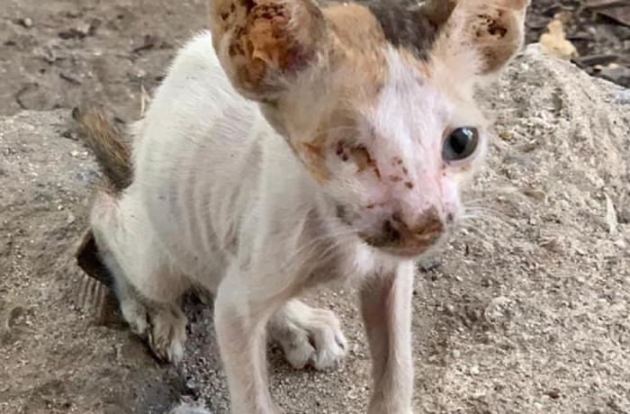 Dubai: masacre de perros y gatos para la Expo 2021