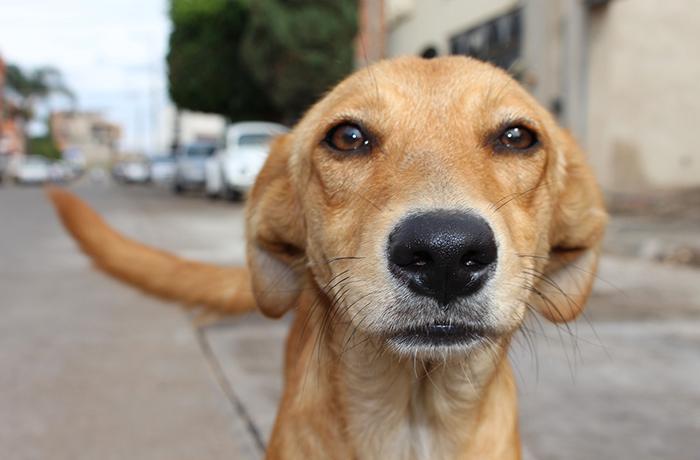El Gobierno deja solos a los animales en los procedimientos judiciales