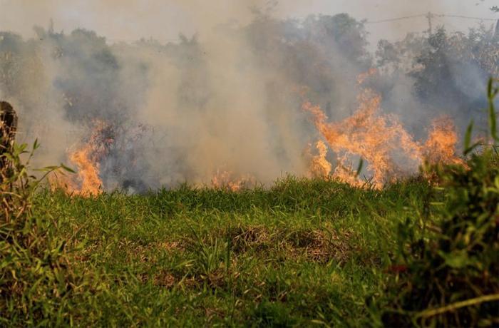 Urgente: los grandes bancos europeos están financiando la crueldad animal, la pérdida de vida silvestre y la destrucción de la Amazonia