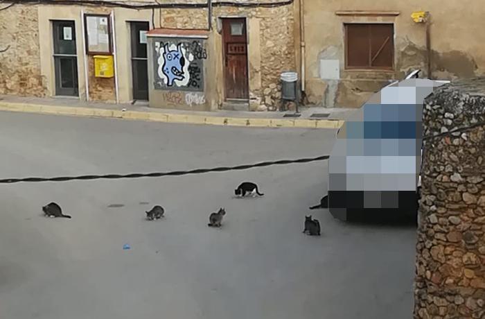 El Ayuntamiento de Viladamat se niega a gestionar los gatos ferales de la localidad y criminaliza a sus alimentadoras