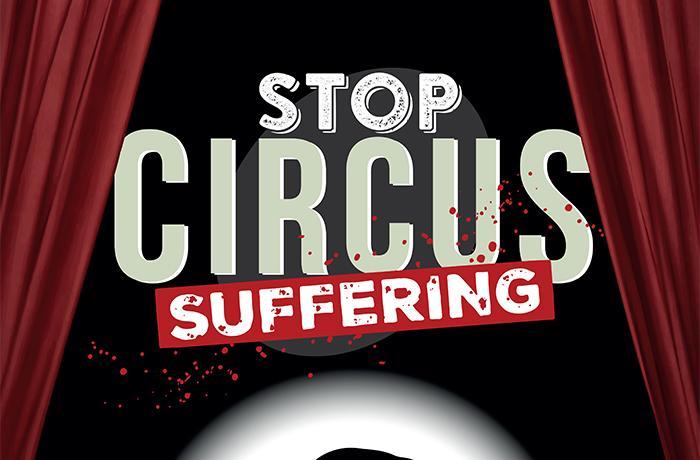 Pongamos fin al sufrimiento en los circos