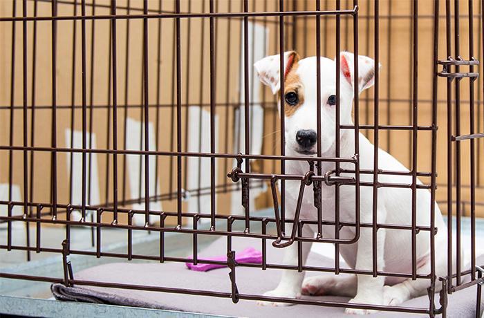 #NoTengoPrecio: la única solución efectiva para detener el tráfico de animales de compañía