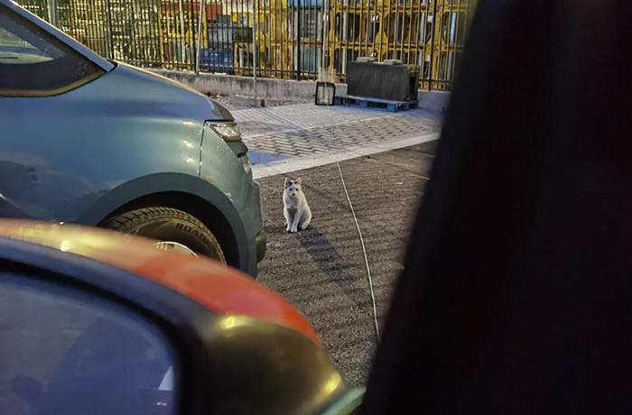 Urgente: ¡SEAT zona franca está procediendo al vallado de su recinto impidiendo que los gatos salgan a comer y beber!