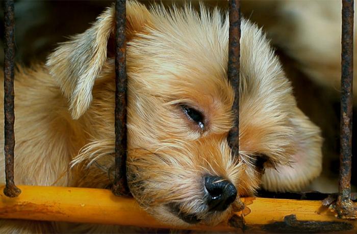 Nos enfrentamos a Milanuncios en los tribunales: ¡ayúdanos a defender a los animales!