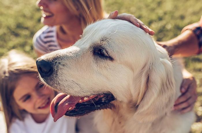 El congreso debate mañana una triple reforma legal para que los animales dejen de ser cosas