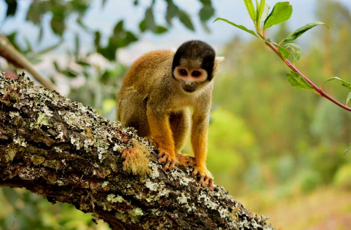 Histórico: Italia prohíbe la importación, tenencia y comercio de animales salvajes y exóticos