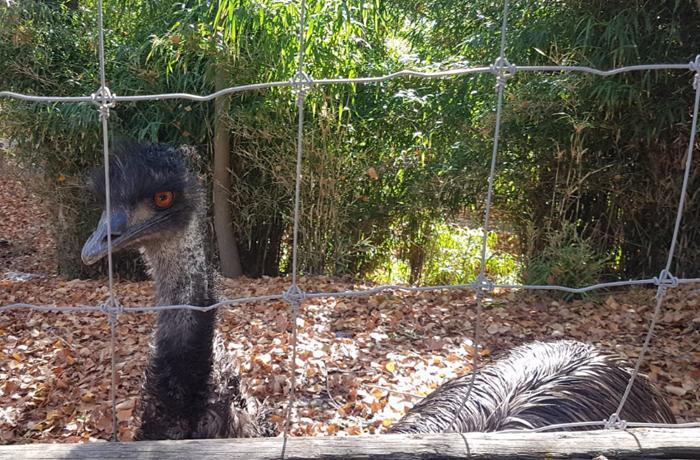Actualización sobre el Zoo de Almuñecar