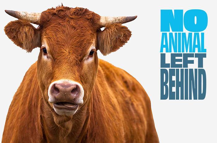 #NoAnimalLeftBehind: porque tenemos que acabar con el transporte de animales vivos