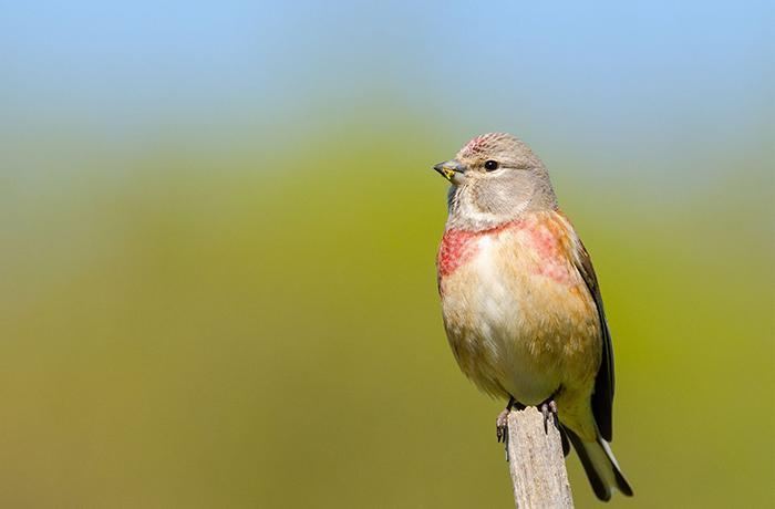Nuevo curso online: El Silvestrismo, qué es y cómo afecta a los pájaros
