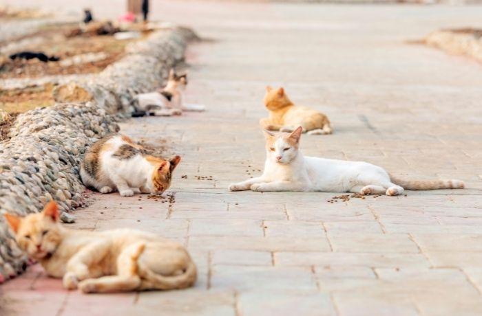 Respuesta de veterinarias expertas en medicina felina al informe del Consejo General de Colegios Veterinarios de España
