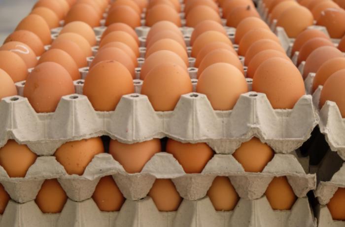 España, a la cola de Europa en protección de las gallinas