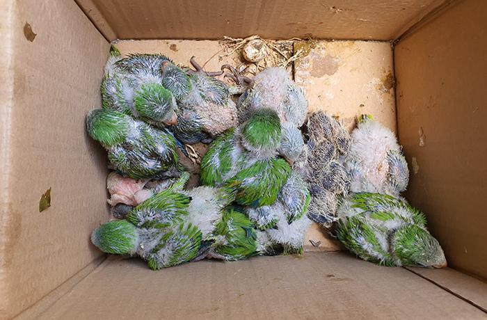 La poda de árboles en primavera sigue matando aves