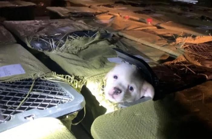 "En China, la moda de las ""Pet Mystery Box"" ya ha matado a miles de animales"