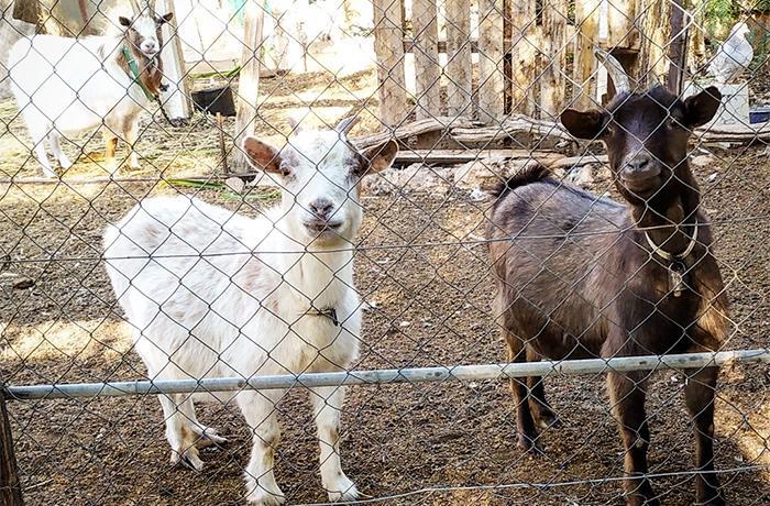 URGENTE: Necesitamos ayuda de santuarios, centros de rescate y refugios para reubicar los últimos animales del caso de Lorca