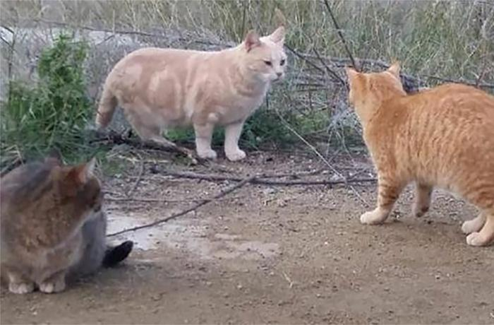 En Montornès del Vallès finalmente NO se instalará un castillo de fuegos en la zona de una colonia de gatos