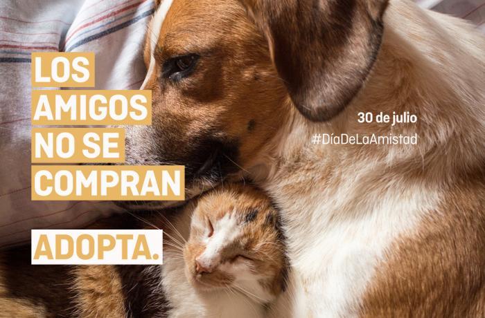 Los amigos NO se compran. Adopta: ¡Nuestra nueva campaña en las calles de Madrid!