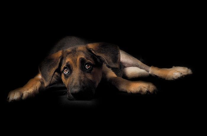 Nueva campaña contra el abandono de animales Verano 2021 del Ministerio