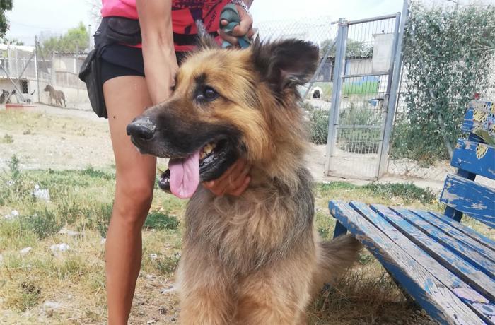 Conseguimos el decomiso de Owen, perro que malvivía en una finca en situación de semiabandono