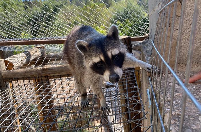 ¡Finalizamos la reubicación de todos los animales del caso de Lorca!