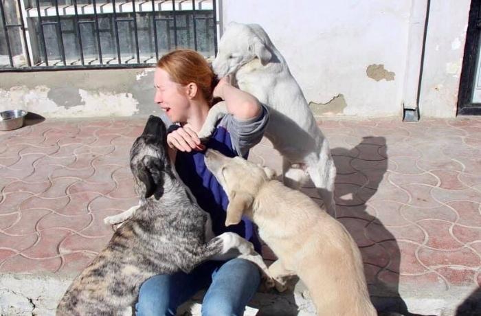 Las entidades de animales siguen atrapadas en Kabul