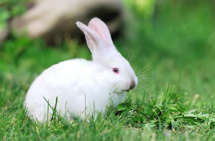 México es el primer país de América del Norte en prohibir los ensayos con animales para cosméticos