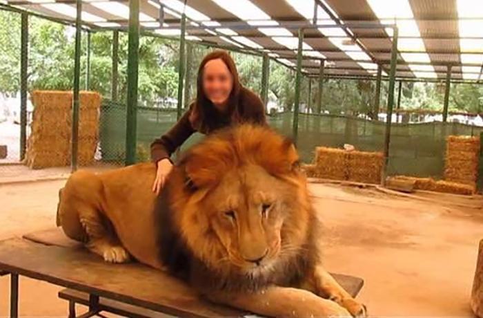 Acuerdo para trasladar a 57 felinos del zoo de Luján a un santuario en EEUU