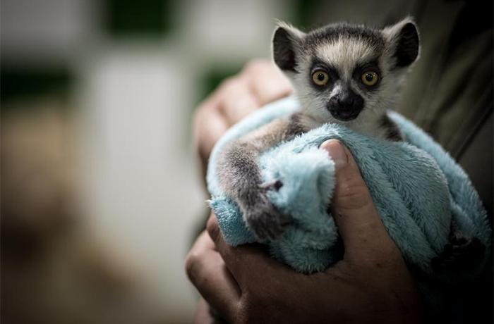 Desde InfoZoos pedimos que cesen las interacciones directas entre animales salvajes y los visitantes en los zoos españoles