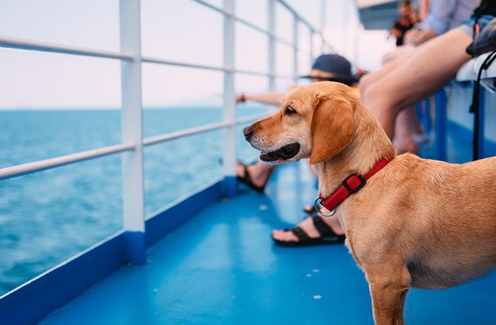 Con nuestro asesoramiento, Trasmed se convierte en una naviera pet friendly