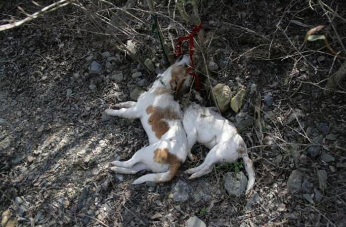 Dos perros maltratados hasta la muerte en Tarragona