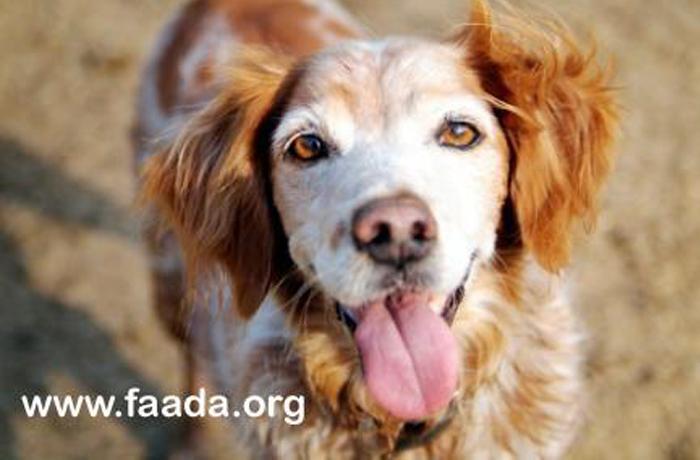 Las ONGs de protección animal bien puntuadas por el CIS