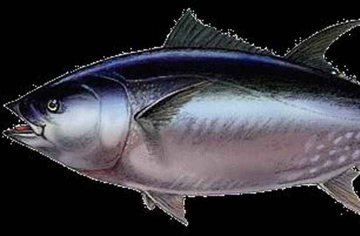 Ecologistas en Acción exige un etiquetado informativo con el contenido de mercurio en el pescado