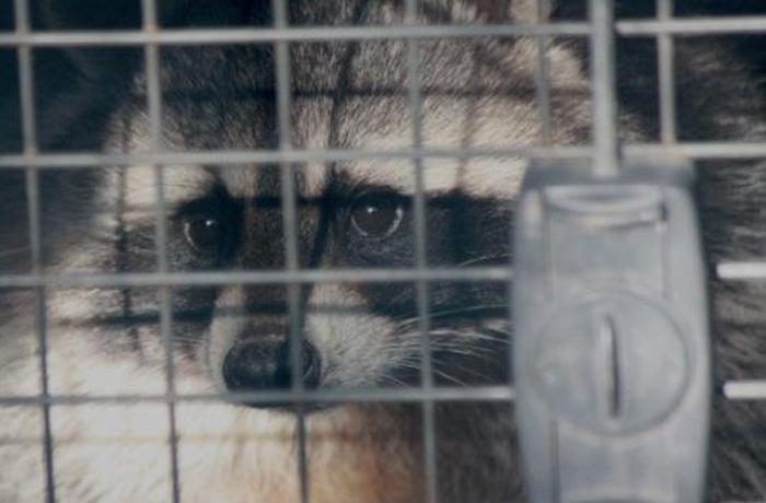 FAADA traslada trece animales salvajes para ofrecerles un futuro mejor