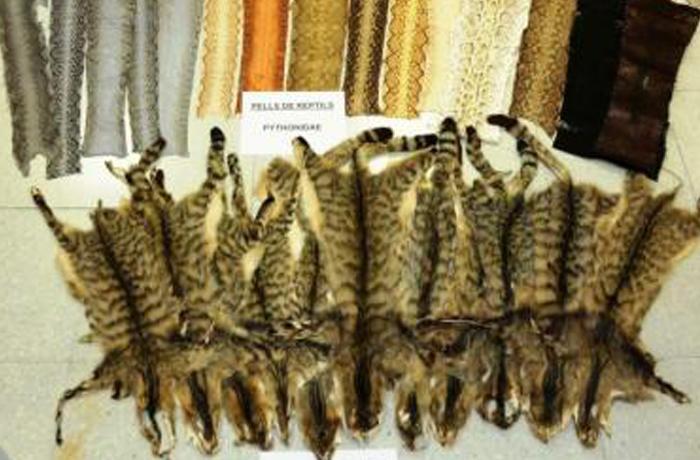 La pieles ilegales de animales intervenidas en el Mercado de los Encants eran de gato salvaje y serpiente