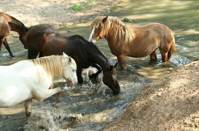 Un caballo cuyo destino era el matadero consigue ser indultado