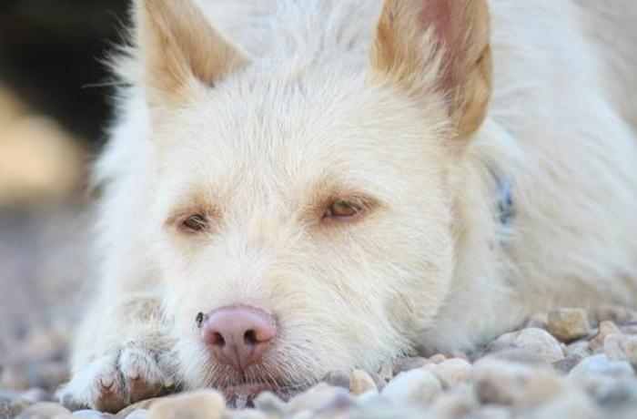 Lípex, de perro de caza a perro de casa