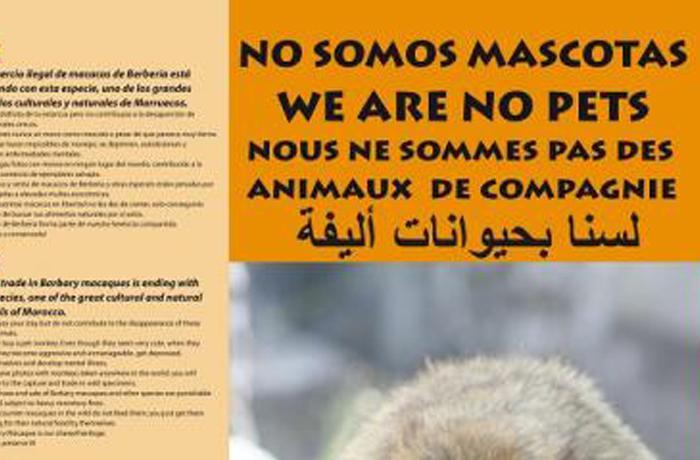 """""""No somos mascotas"""