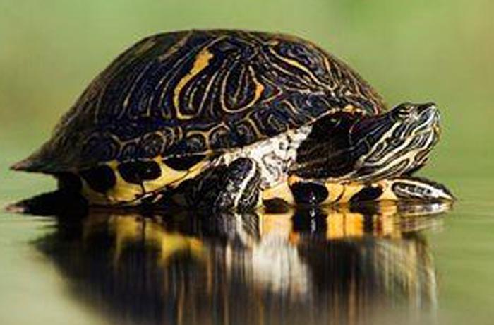Censo 2013-2014 de animales exóticos de FAADA: 5.773 ejemplares recogidos