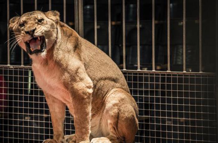 Catalunya da un paso más en favor de los animales prohibiendo su uso en los circos