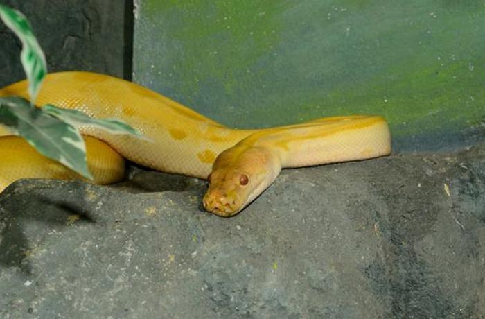 ¿Sabías que un 12% de especies de serpientes pueden desaparecer?