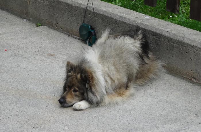 Protejamos a nuestros perros de los robos