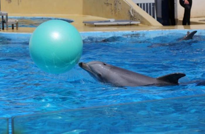Nuestra investigación de los delfinarios de España en el X Congreso de la Sociedad Española de Cetáceos