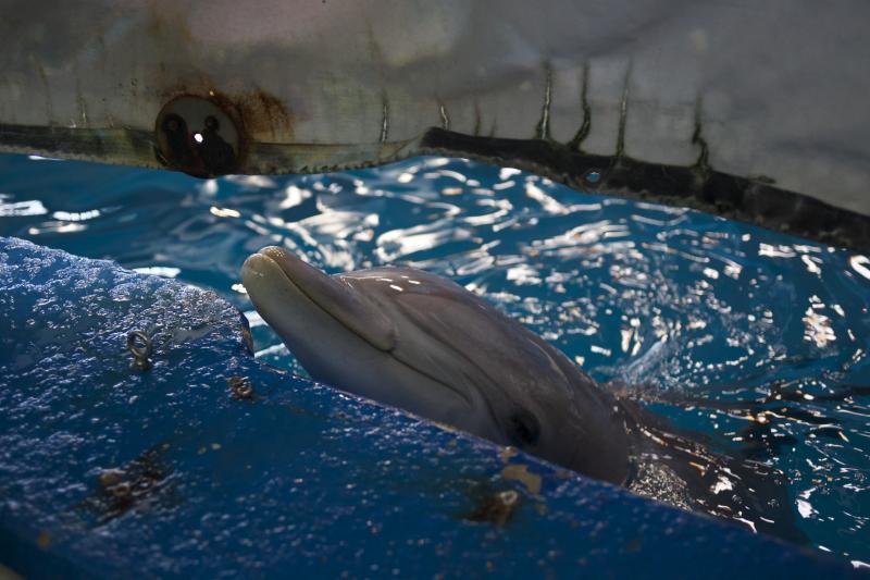 Nuestras opciones de santuarios para los delfines de Barcelona